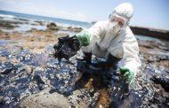 La spugna cattura petrolio