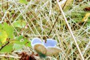 i fili e la farfalla
